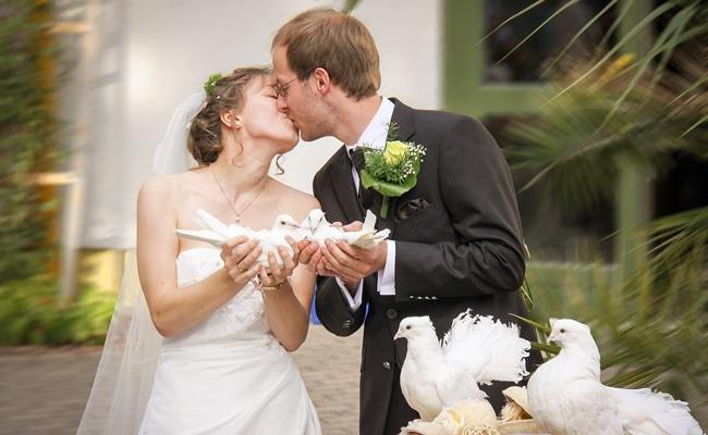 WHITE DOVES FOR WEDDING